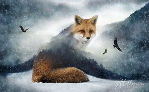 HF-COTW-FOX
